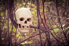 Ainda vida com o ser humano do crânio na árvore coberto de vegetação Fotos de Stock