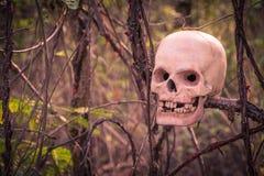 Ainda vida com o ser humano do crânio na árvore coberto de vegetação Imagens de Stock