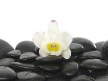 Ainda vida com orquídea bonita Fotografia de Stock Royalty Free