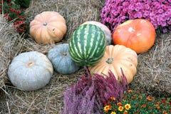 Ainda vida com os vegetais maduros no close up seco do feno Fotografia de Stock