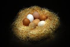 Ainda vida com ovos Fotografia de Stock Royalty Free