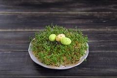 Ainda vida com ovos de codorniz em um musgo verde Fotografia de Stock Royalty Free