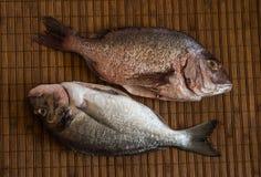 Ainda vida com peixes Foto de Stock