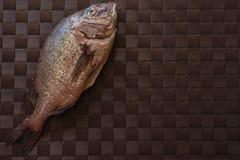Ainda vida com peixes Fotografia de Stock Royalty Free