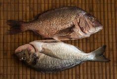 Ainda vida com peixes Imagens de Stock
