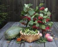 Ainda vida com ramalhete do outono e abóbora vegetal Fotografia de Stock