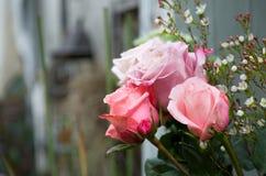 Ainda a vida com rosa de aumentou no houseplant Foto de Stock Royalty Free