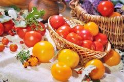 Ainda vida com tomates Foto de Stock Royalty Free