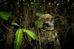 Ainda vida com um crânio na floresta Imagem de Stock Royalty Free
