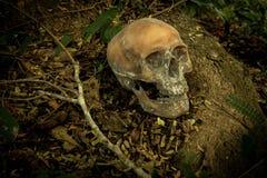 Ainda vida com um crânio na floresta Fotografia de Stock Royalty Free
