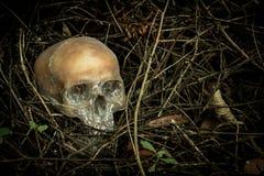 Ainda vida com um crânio na floresta Imagens de Stock