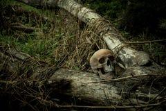 Ainda vida com um crânio na floresta Foto de Stock