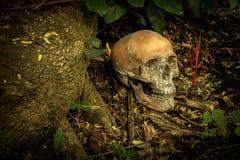 Ainda vida com um crânio na floresta Imagens de Stock Royalty Free