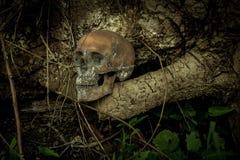 Ainda vida com um crânio na floresta Fotos de Stock