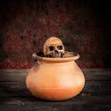 Ainda vida com um crânio no frasco, produto de cerâmica Imagens de Stock Royalty Free