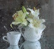 ainda vida com um lírio branco após o vidro fotografia de stock