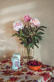 Ainda vida com um ramalhete fresco do grupo das peônias brancas, cor-de-rosa no vaso de vidro, cerejas escuras na tabela, toalha  Fotografia de Stock