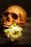 Ainda vida com um ser humano do crânio Imagem de Stock Royalty Free