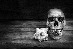 Ainda vida com um ser humano do crânio Fotografia de Stock