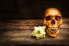 Ainda vida com um ser humano do crânio Imagens de Stock