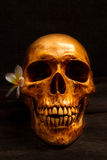 Ainda vida com um ser humano do crânio Foto de Stock