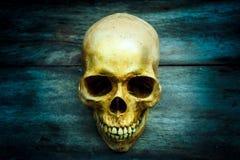Ainda vida com um ser humano do crânio Imagens de Stock Royalty Free
