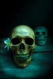Ainda vida com um ser humano do crânio Fotos de Stock Royalty Free