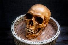 Ainda vida com um ser humano do crânio Imagem de Stock