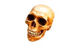 Ainda vida com um ser humano do crânio Fotografia de Stock Royalty Free
