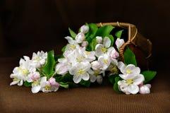 Ainda vida com uma cesta da maçã das flores Foto de Stock Royalty Free
