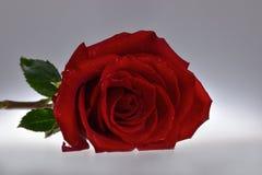 Ainda-vida com uma rosa vermelha com as pétalas vermelhas de veludo foto de stock