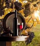 Ainda vida com vinho branco Imagens de Stock Royalty Free