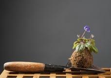 Ainda a vida com violeta de florescência e o jardim trabalham com pá Foto de Stock Royalty Free