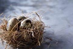 Ainda-vida conceptual com os ovos de codorniz no ninho do feno sobre o fundo cinzento, fim acima, foco seletivo Fotografia de Stock