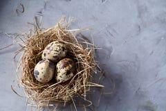 Ainda-vida conceptual com os ovos de codorniz no ninho do feno sobre o fundo cinzento, fim acima, foco seletivo Imagem de Stock Royalty Free