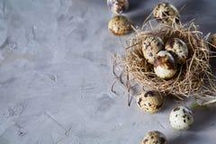 Ainda-vida conceptual com os ovos de codorniz no ninho do feno sobre o fundo cinzento, fim acima, foco seletivo Fotografia de Stock Royalty Free