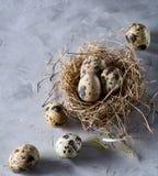 Ainda-vida conceptual com os ovos de codorniz no ninho do feno sobre o fundo cinzento, fim acima, foco seletivo Foto de Stock