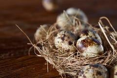 Ainda-vida conceptual com os ovos de codorniz no ninho do feno sobre o fundo de madeira escuro, fim acima, foco seletivo Imagem de Stock
