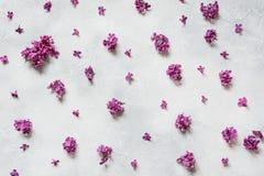 Ainda vida criativa de flores lilás roxas no fundo claro Vista superior Configuração lisa Fotos de Stock Royalty Free