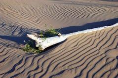 Ainda-vida das dunas de areia Fotos de Stock Royalty Free