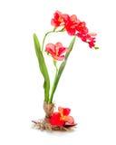 Ainda vida das flores artificiais de um freziya Fotos de Stock