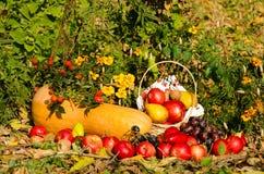 Ainda vida das frutas e legumes Imagens de Stock