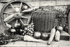 Ainda vida das frutas e legumes, incolor Fotos de Stock
