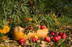 Ainda vida das frutas e legumes no jardim Foto de Stock Royalty Free