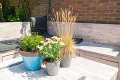 Ainda vida das plantas em uns potenciômetros na tabela de madeira na cidade velha de Sche Foto de Stock