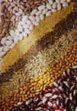 Ainda-vida das sementes Imagens de Stock