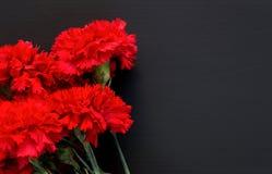 Ainda vida de diversos cravos vermelhos no fundo preto Foto de Stock Royalty Free