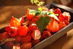 Ainda vida de frutos de Fizalis Foto de Stock