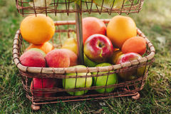 ainda vida de frutos maduros na cremalheira da cesta fora na grama no dia de verão Imagem de Stock