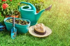 Ainda-vida de jardinagem e flor-crescente home da flor Imagem de Stock